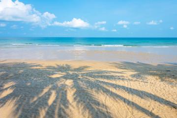 Wall Mural - Shadow coconut palm tree on sunny beach