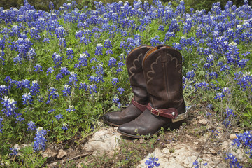Cowboy boots with spurs in a field of Texas bluebonnets