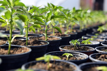 Fototapeta Small plant sapling obraz