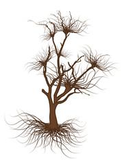 Dead Tree Vector Element Design