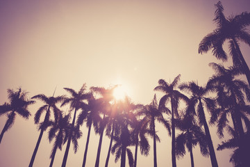 Fotorollo Palms coconut palm tree silhouette vintage retro
