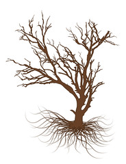Drawing of Dead Tree
