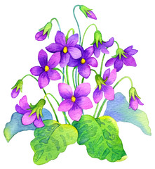 Watercolor painting. Delicate flowers bush forest violet