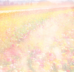 dreamy abstract photo of wild flower field and bright bokeh ligh