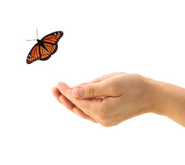 Hands releasing a Monarch butterfly