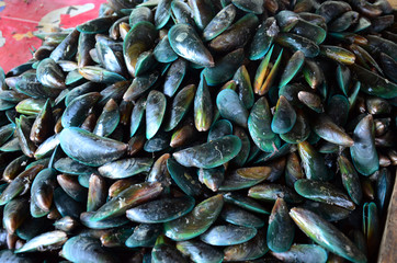 Mussels sale for cooking at Seafood market