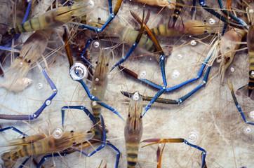 Prawns or Shrimps sale for cooking at Seafood market