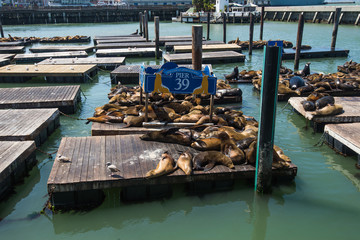 Sealions on Pier39, San Francisco