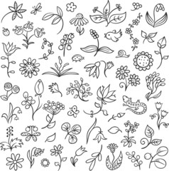 Floral Design Elements Outlines