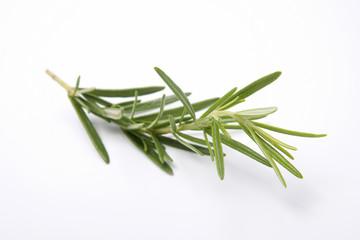Rosemary on white backbround