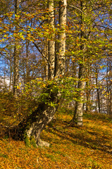 Colours of autumn in a forest at sunny morning