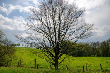 Bäume im Rheinland