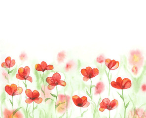 Watercolor field with red poppies. Banner with flowers