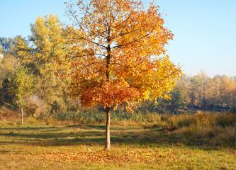 Big yellow autumn tree