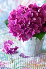 beautiful purple hydrangea flowers on a table .