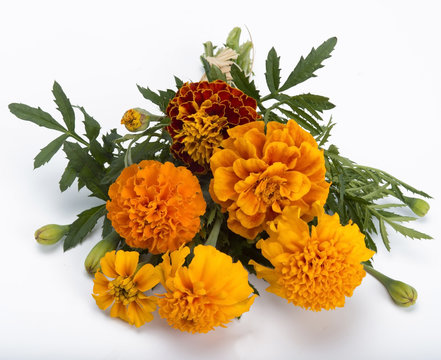 ..marigold bouquet. isolated on white background