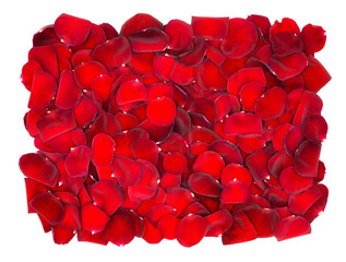 Beautiful red rose petals background