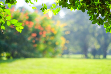 Blurred tree at park with bokeh light, natural background Wall mural