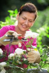 Wall Mural - Frau im Garten schneidet Blumen, Blumenschere