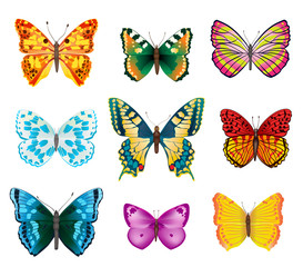 set of butterflies with open wings on white