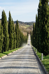 Zypressenallee am toskanischen Landgut