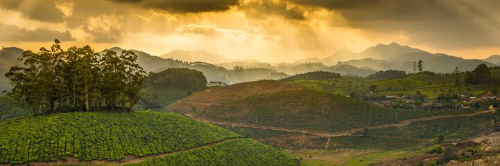 Wall Mural - Tea plantations