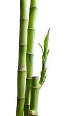 Wall Mural - bamboo leaves