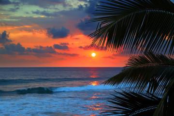 Fototapete - beautiful sea sunset and palm leaves