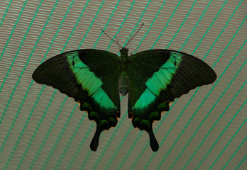 Butterfly sits on a grid