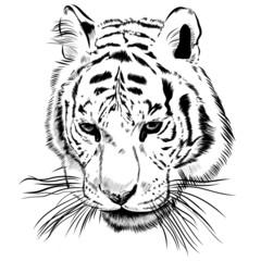 Original artwork tiger with dark stripes, isolated on white