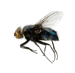 fly on a white