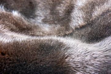 Mink fur texture background