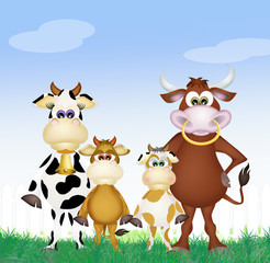family of cows