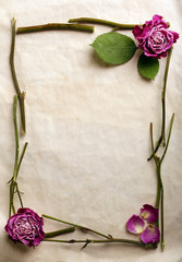 Dried flowers on paper background