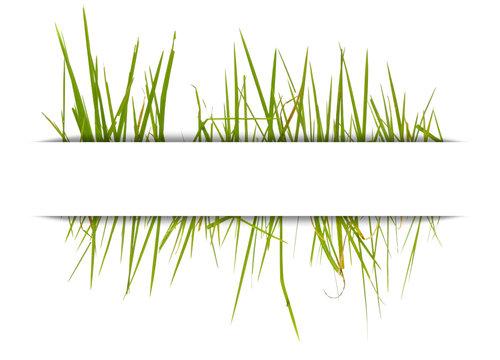 herbe sous bandeau blanc