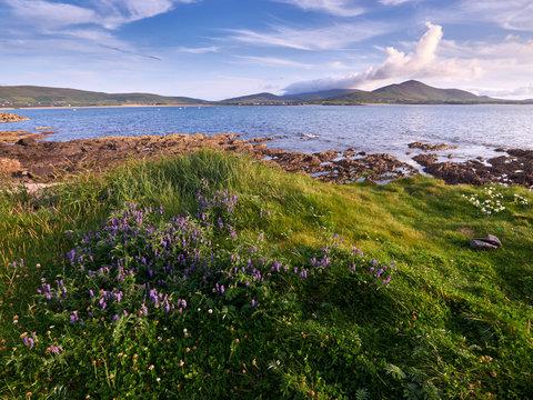 Coastline of the Dingle peninsula, Western Ireland