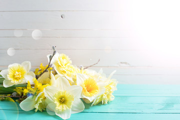 Fresh  spring yellow narcissus  flowers