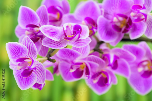 Orchidee Im Detail Und Bambus Stock Photo And Royalty Free Images