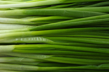 green onion isolated