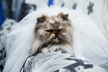 wedding portrait a cat