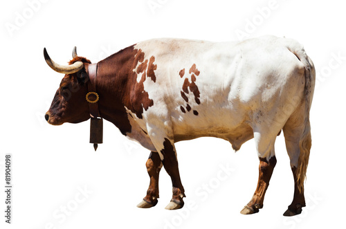 Fototapete Standing adult bull. Isolated over white