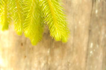 Blur natural background