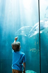 Young man pointing fish in a illuminate tank