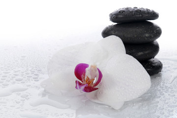 Fototapeta White orchid and spa stones