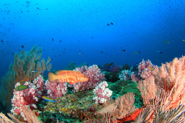 Coral Reef and Fish underwater in ocean