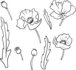 Set of linear drawing poppy flowers