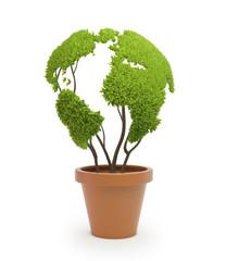 Pot plant shaped like a world map
