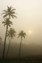 fog in Goa