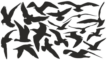 Set of silhouettes of seagulls in flight.