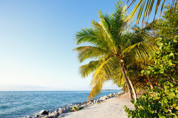 Key West Beach With Palm Coconut Trees